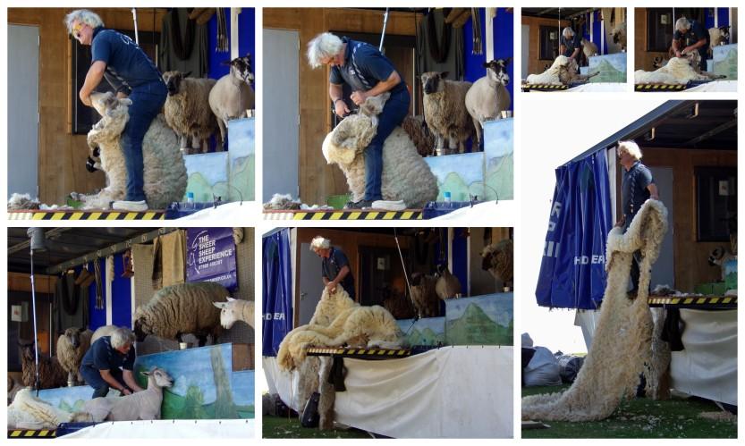 Sheer Sheep Experience