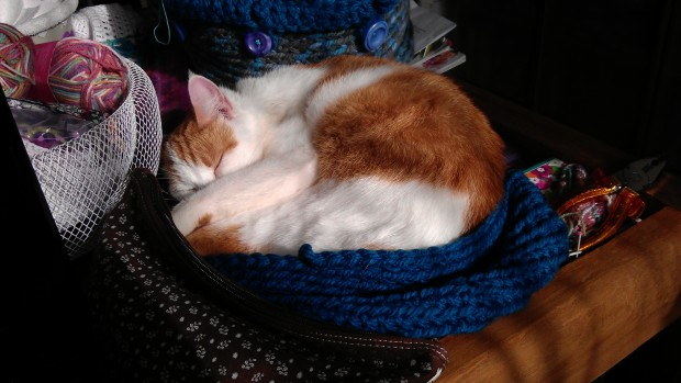 Meredith made it known that she wanted a crochet cat bed.