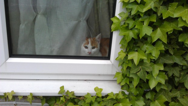 She was always there waiting for us to get home.