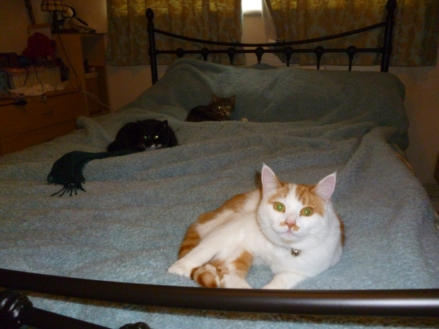 One of the few pictures I have of all three cats together - and you can see Meredith is about to do something wicked.