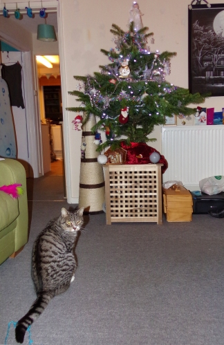 Ollie is unimpressed with the conspicuous lack of home-made tree decorations. He can be a very judgemental cat.